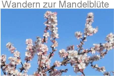 Wanderungen zur Mandelblüte